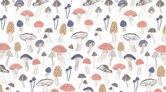Dear Stella - Foxtail Forest - Foraging for Fungi